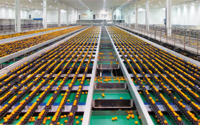 Can South Africa's recent citrus industry logistics successes be replicated?